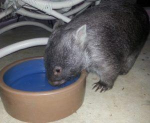 Olivia drinking water