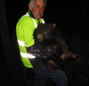 Reg with wombat websize