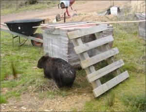 Wombat attack border