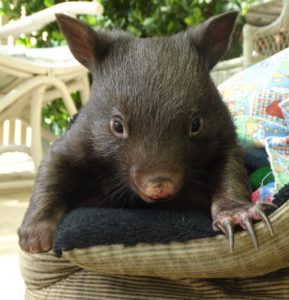 Wombat play websize